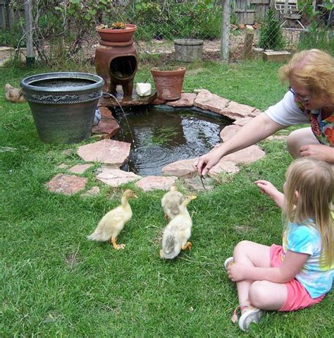 backyard duck pond www pixshark com images galleries