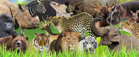 life cycle  animals small animal planet