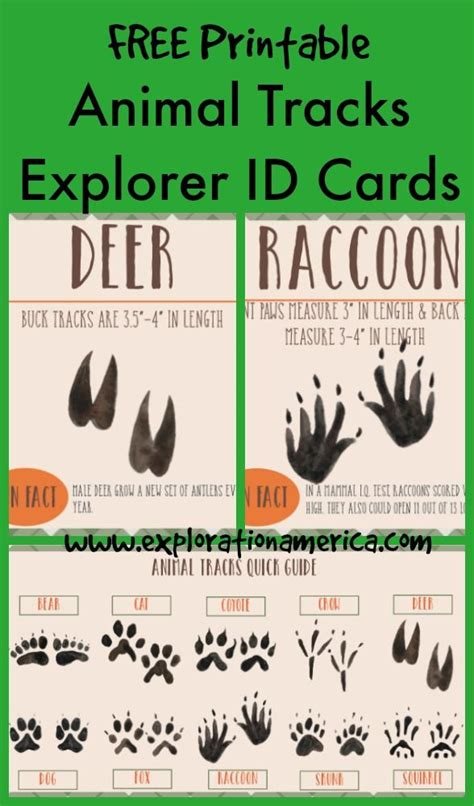printable animal tracks identification free printable moon phases id cards bonus poster