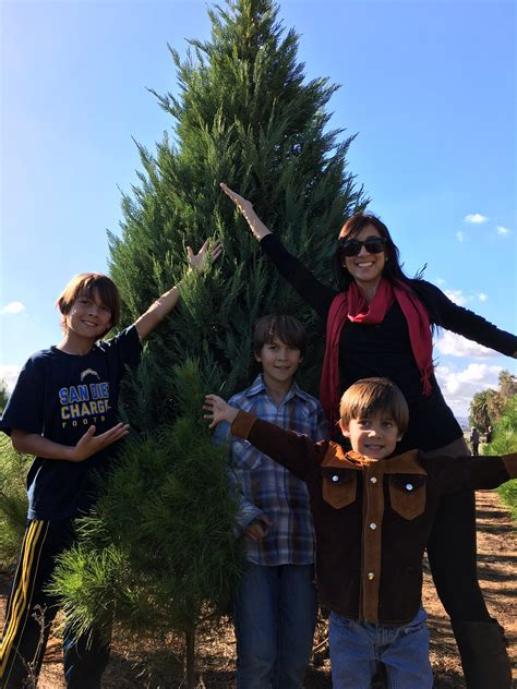 san diego christmas tree farms photo albums fabulous