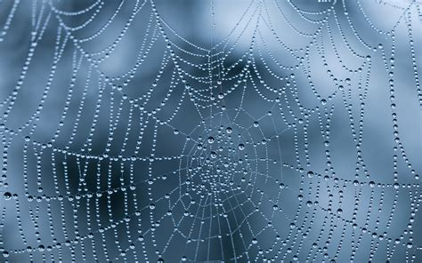 hd web 17 spiderweb wallpapers with water drops and
