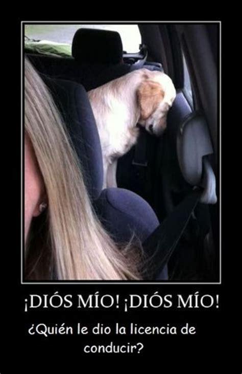 imágenes de inteligentes graciosas 17 best images about humor on pinterest tes pms humor