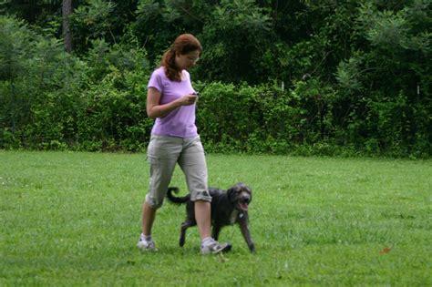 pace setter dog training pacesetter training kennel winterville ga 30683 706