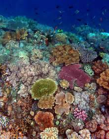 Coral Reef Research Paper by Coral Reef Management In A Changing Climate Rj Dunlap Marine Conservation Program