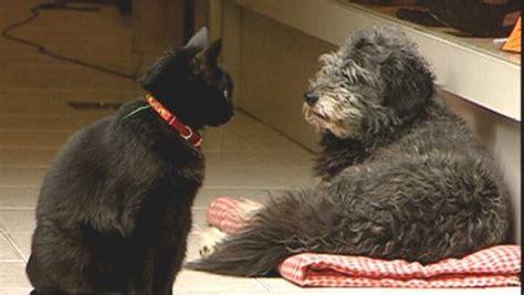 perros para vivir en un piso vivir en un piso de alquiler con mascota ley y sentido 250 n