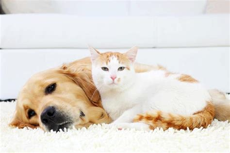 Best Flooring For Pets What Is The Best Laminate Flooring For Pets