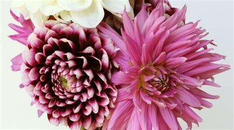 fiori di settembre 7 fiori di settembre fito