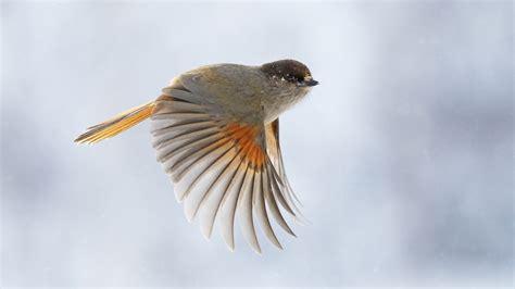 Coloriage Oiseau En Vol 224 Imprimer