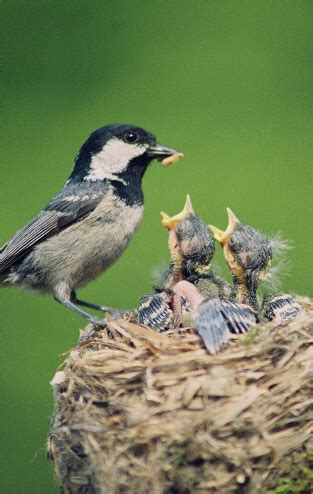 what can a bird do what do baby birds eat how to feed baby birds and food