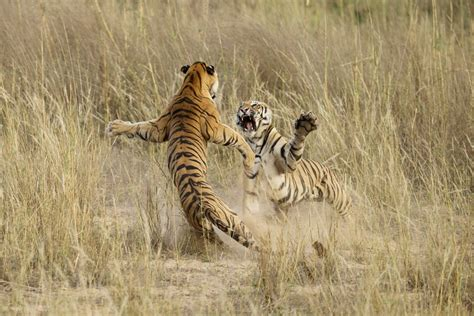 2014 Contests And Sweepstakes - annual national geographic photo contest 2014 business insider