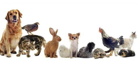 imagenes del animal weta 191 para qu 233 se quiere tener un animal de compa 241 237 a en casa