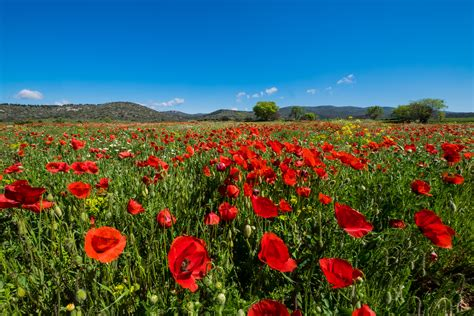 fiore selvatico immagini paesaggio natura cielo prato prateria