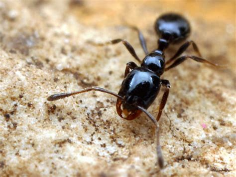 black ants error 410 resource