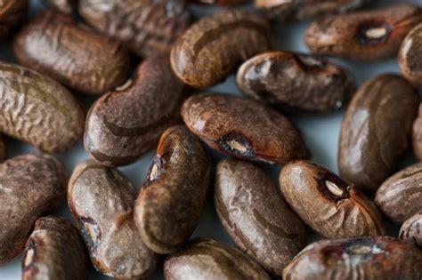 seed saving part  storing beans squash   large
