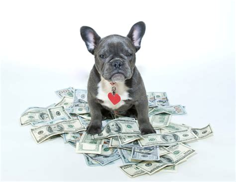 cost of a puppy the rising cost of pet care and what to do about it qsle