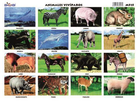 imagenes animales oviparos y viviparos 25 ejemplos de animales viv 237 paros ejemplos