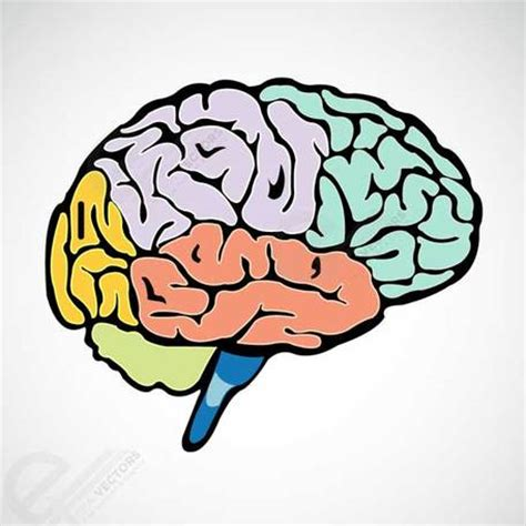 brain clipart active brain clip cliparts