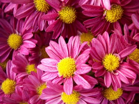 Imagenes De Varias Flores | wallpapernarium flores bonitas