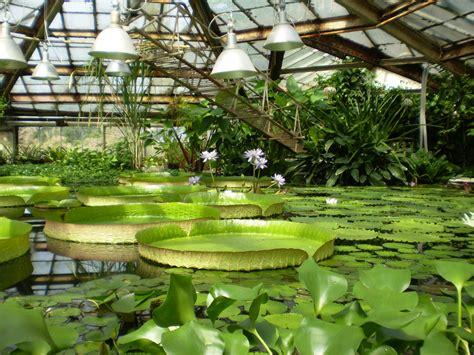 St Petersburg Botanical Gardens Petersburg Botanical Garden Petersburg