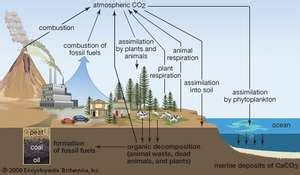 Biogeochemical Cycle Science Britannica Com