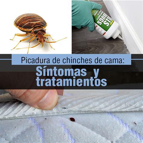 insectos de cama picadura de chinches de cama s 237 ntomas y tratamientos la