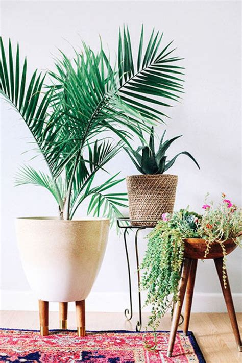 Best Indoor Planters by 25 Best Ideas About Indoor Planters On