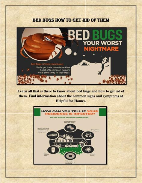 what is the best way to kill bed bugs what is the best way to kill bed bugs 28 images what