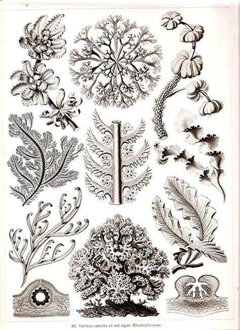 libro ernst haeckel 97 best 25 spider art ideas on spider web drawing watercolor fireworks and