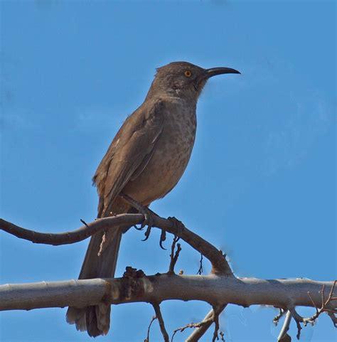 best 28 birds in az birds arizona highways