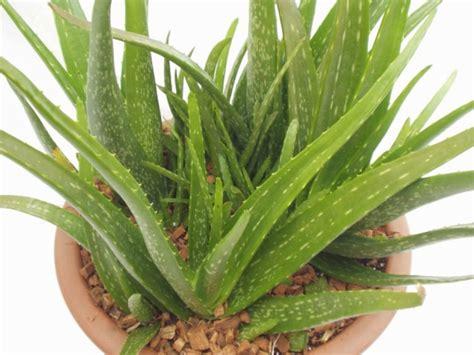 Tolle Zimmerpflanzen by Exotische Zimmerpflanzen Tolle Ideen F 252 R Ihre Wohnung