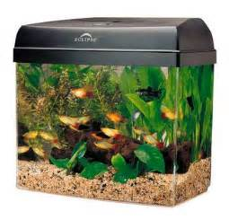 revealed how many fishes can you keep in your fish tank