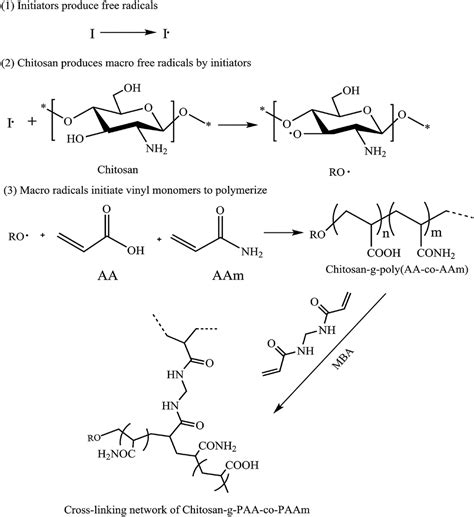 How Does Mba Cross Link Acrylamide by Advances In Chitosan Based Superabsorbent Hydrogels Rsc