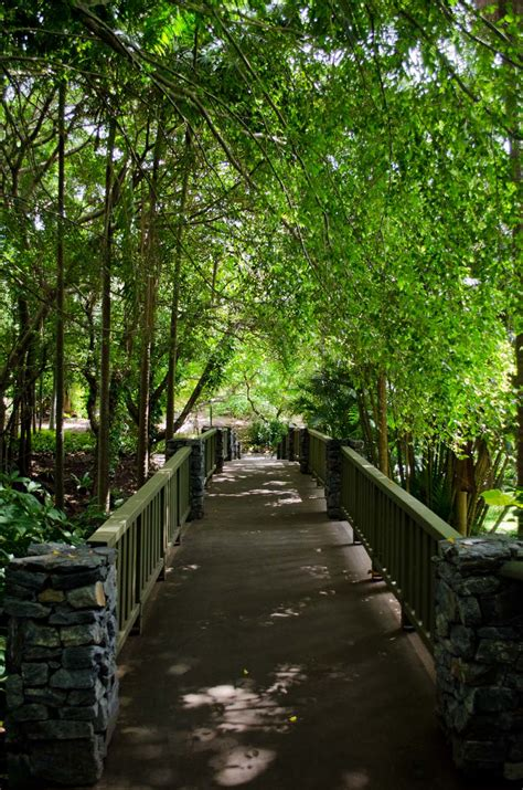 Botanical Garden Brisbane Mount Coot Tha Botanic Gardens Brisbane