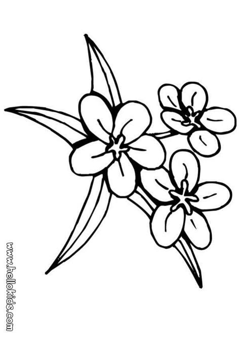 hawaiian flowers coloring pages az coloring pages