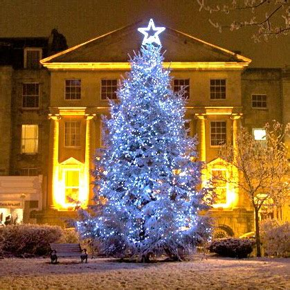 the big christmas tree switch on 2017 discover clifton