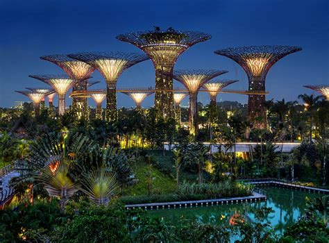 the supertrees of singapore kuriositas