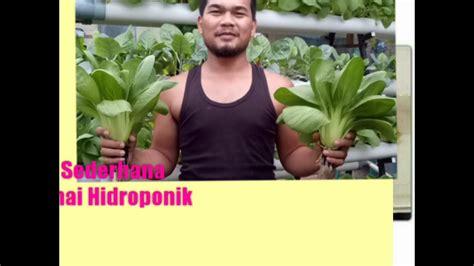 cara membuat nutrisi hidroponik youtube cara menyemai sawi hidroponik youtube