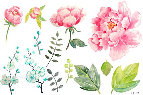 peony clipart wedding watercolor pink peony graphics on creative market