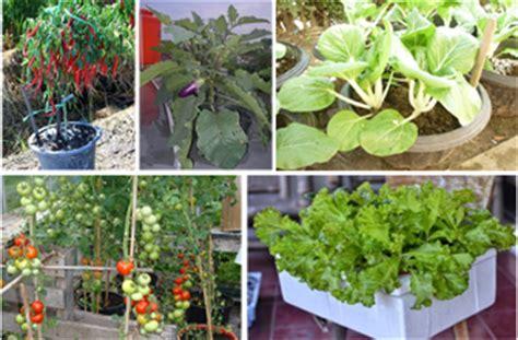 budidaya tanaman  pot polybag  verticulture