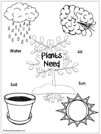 what do plants need to grow worksheet image result for what plants need to grow worksheet