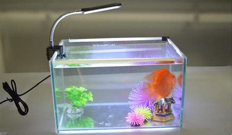 small clip on aquarium light aquarium clip light 1000 aquarium ideas