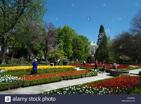 Royal Botanical Gardens Madrid Tulips In The Royal Botanical Gardens Madrid Spain Stock