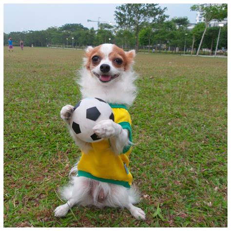 play with puppies play football soccer with paws