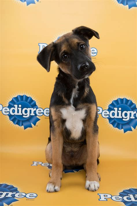 puppy bowl teams 18 reasons why the puppy bowl is better than the bowl