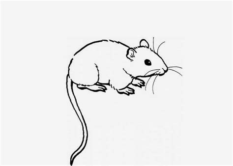 Rat Free Coloring Pages Rat Coloring Pages