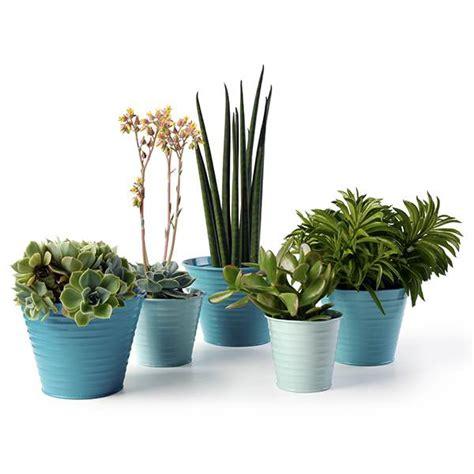 in door plants pot three four plants argements buy set of five ombre pots