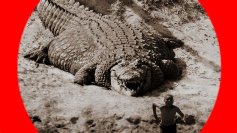 world s world s 10 biggest crocodiles ever recorded the ultimate