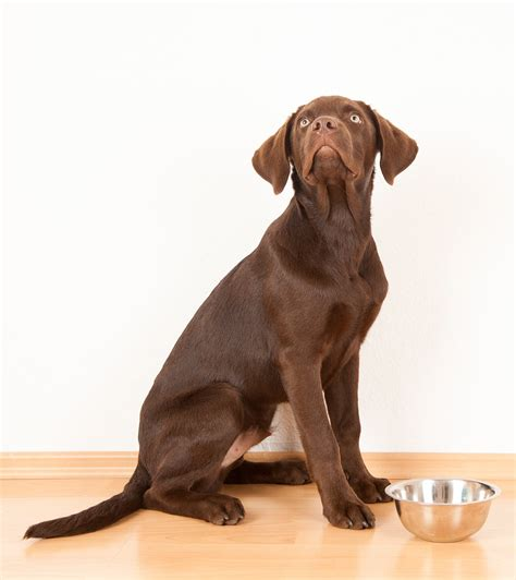 1st Choice Puppy Medium Large Breeds Food best large breed puppy food make the right choice