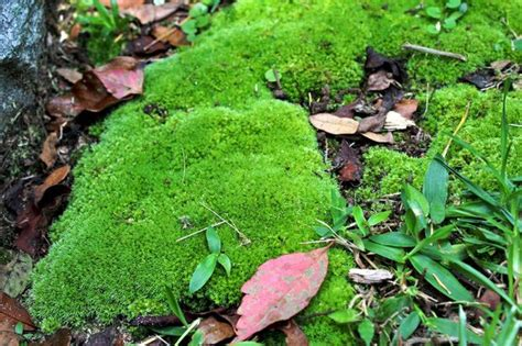 moss grows bill finch alcom