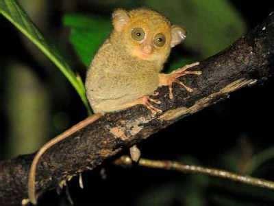 flora  fauna khas bangka belitung alamendahs blog
